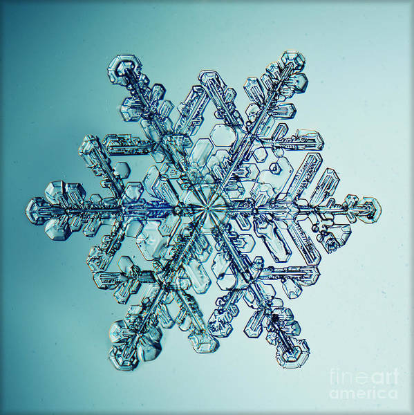 Freshness Wall Art - Photograph - Ice Crystal Snowflake Macro by Kichigin