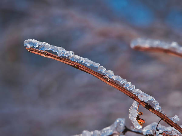 Photograph - Ice On Branch by Steven Ralser