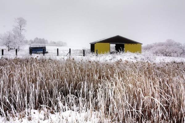 Photograph - Ice Reeds by David Matthews