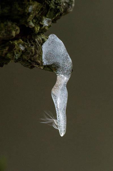 Photograph - Ice Dancer by John Dakin