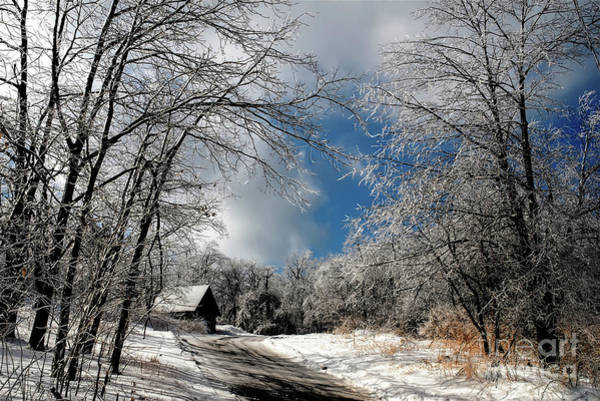 Wall Art - Photograph - Ice Storm Aftermath by Lois Bryan