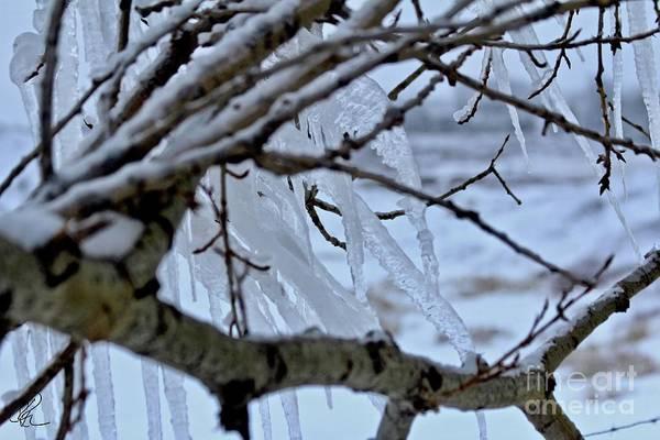 Photograph - Ice Storm by Ann E Robson