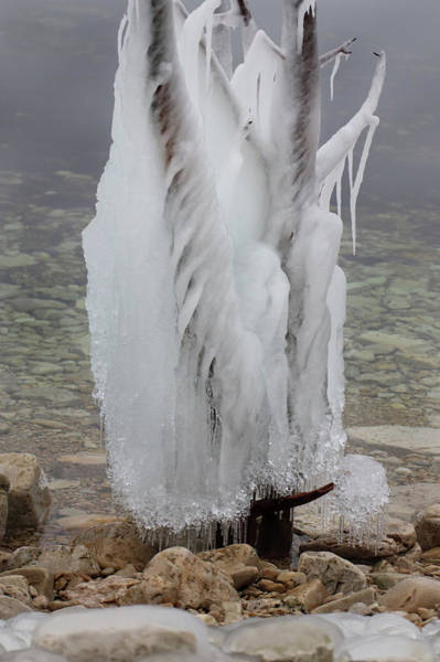 Photograph - Ice Tree by David T Wilkinson