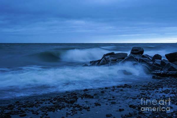 Photograph - Iced Blues by Rachel Cohen