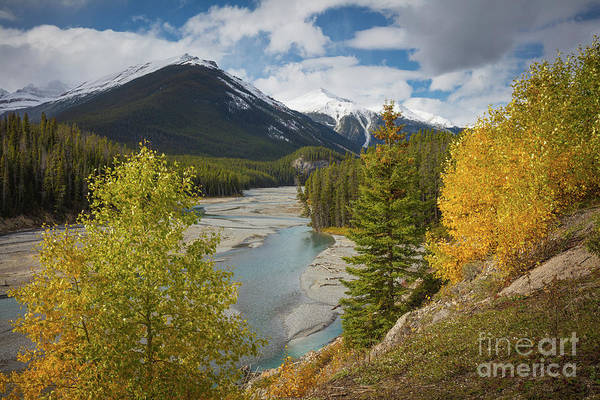 Western Canada Photograph - Icefields Parkway Autumn by Inge Johnsson