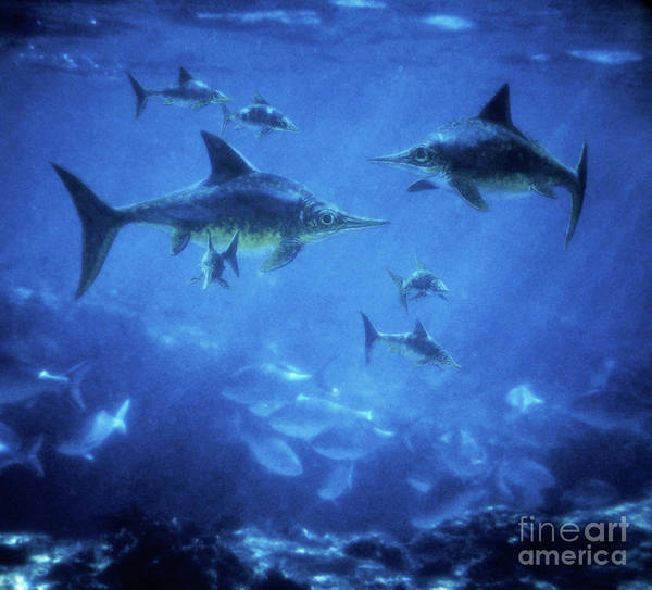 Photograph - Ichthyosaurs by Warren Photographic