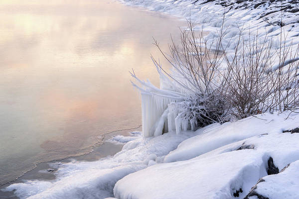 Photograph - Icy - Coral Pink And White On The Lakeshore by Georgia Mizuleva