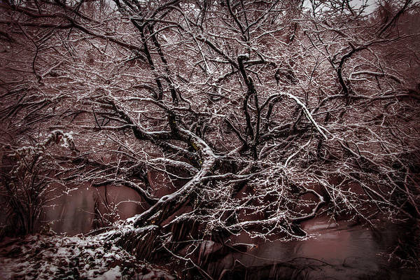 Photograph - Icy Inspiration At Nightfall by Debra and Dave Vanderlaan