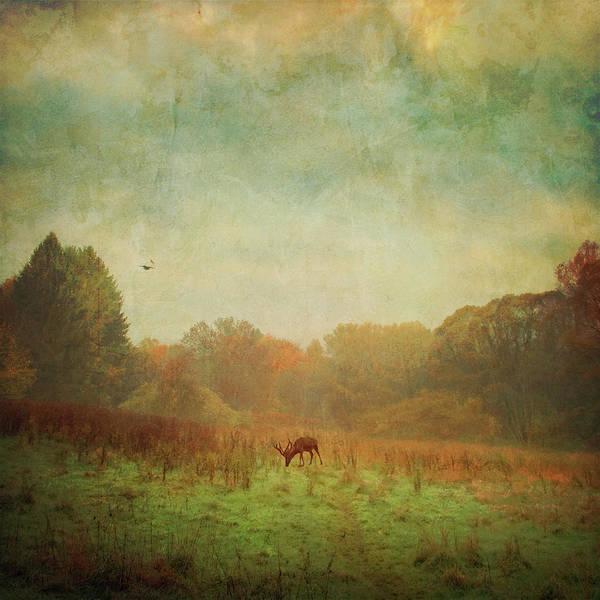 Grass Tree Digital Art - Idyllic Painterly Fall Morning by Dirk Wüstenhagen Imagery