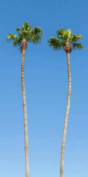 Wall Art - Photograph - Idyllic Palm Trees - Panoramic by Melanie Viola