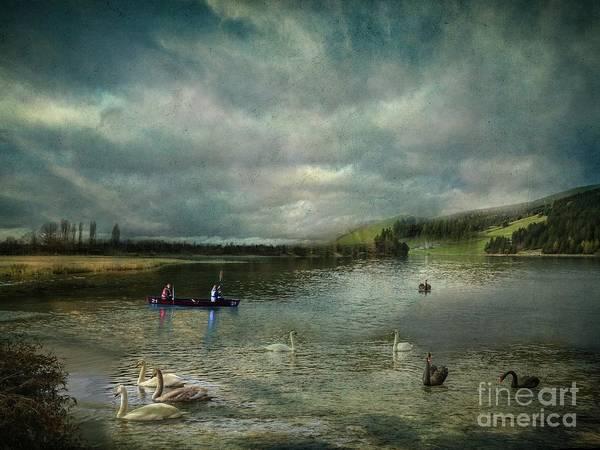 Idyllic Swans Lake Art Print