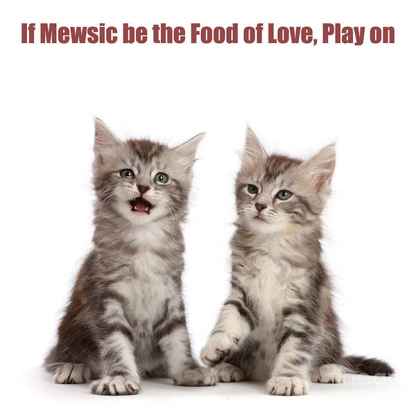 Photograph - If Mewsic Be The Food Of Love, Play On by Warren Photographic