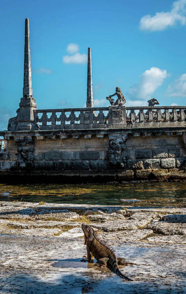 Photograph - Iguana At Vizcaya Barge by Susie Weaver