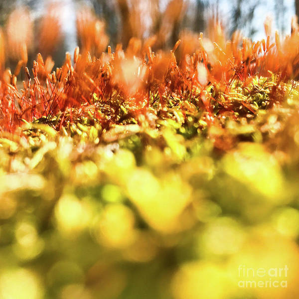Photograph - Orange Moss 3 by Atousa Raissyan