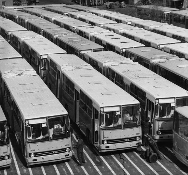 1974 Photograph - Ikarus Buses by Istvan Bara