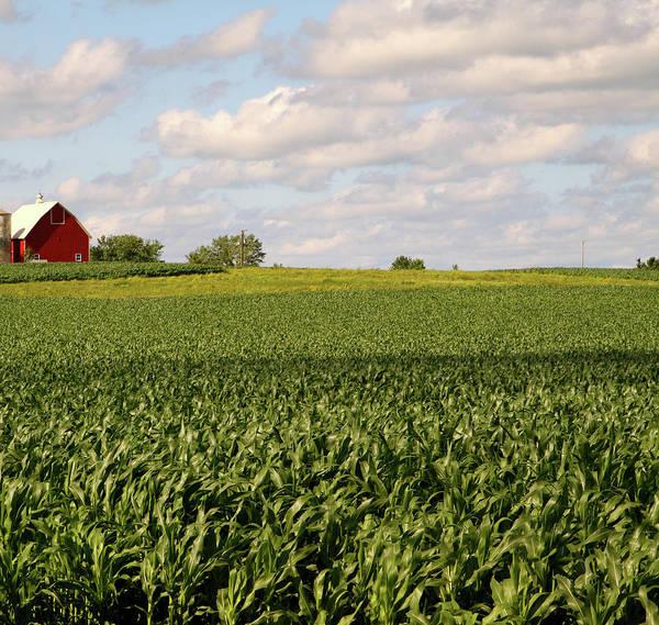 Wall Art - Photograph - Illinois Corn Field by Jenjen42