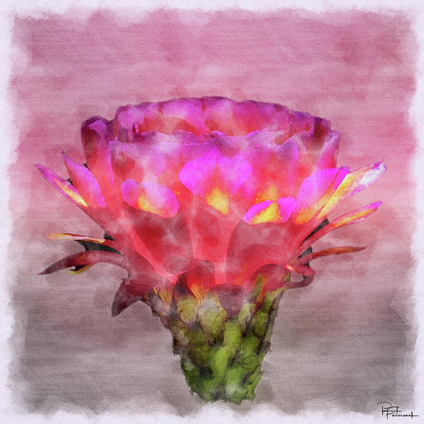 Photograph - Illumination In Digital Watercolor by Rick Furmanek