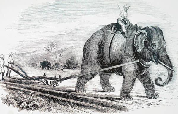 Wall Art - Photograph - Illustration Depicting An Elephant by Uig
