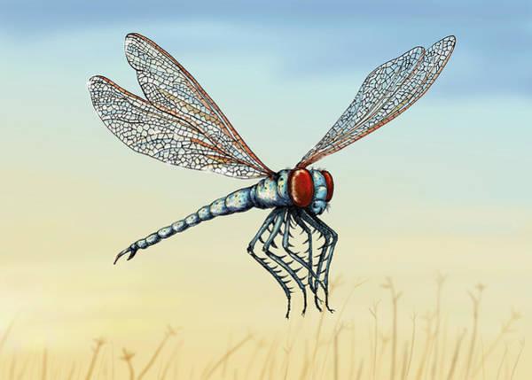 Wall Art - Photograph - Illustration Of Extinct Meganeura Insect by Ikon Images