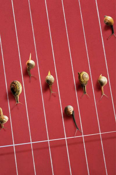 Concentration Photograph - Image Of Snail by Yuji Sakai