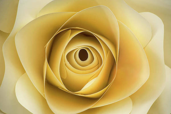 Photograph - Imitation Rose by Don Johnson