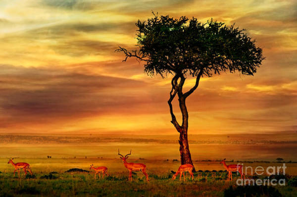 Wall Art - Photograph - Impala At African Sunset Background by Byelikova Oksana