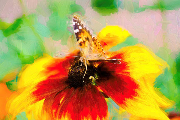Photograph - Impasto Painted Lady Butterfly by Don Northup
