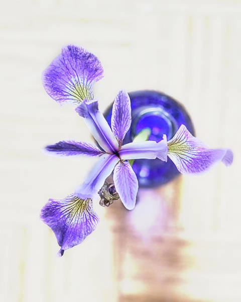 Wall Art - Photograph - In A Blue Bottle by Susan Capuano