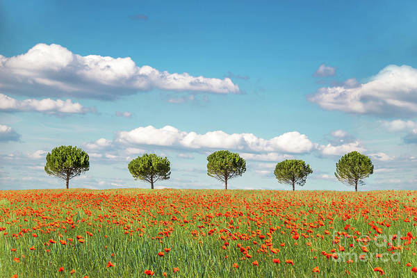 Wall Art - Photograph - In A Row by Delphimages Photo Creations