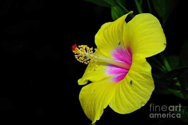 Photograph - In Hard Light by Diana Mary Sharpton