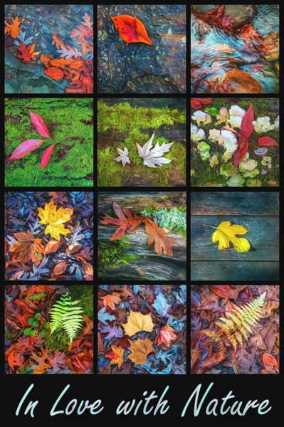 Photograph - In Love With Nature's Watercolors by Debra and Dave Vanderlaan