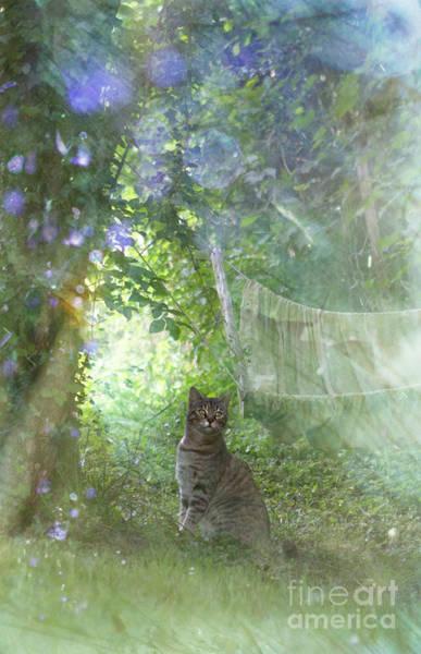 Wall Art - Photograph - In My Garden by Angel Ciesniarska
