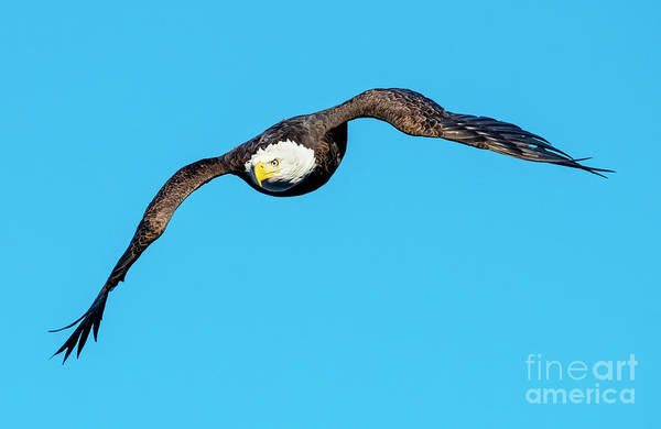 Wall Art - Photograph - In Pursuit by Mike Dawson