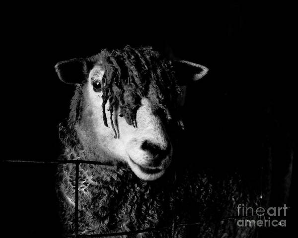 Photograph - In The Barn  by Alana Ranney