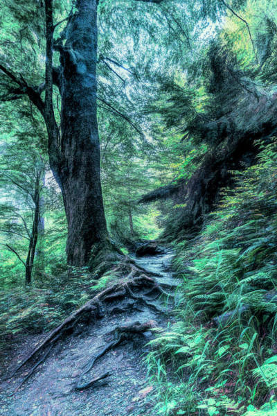 Photograph - In The Cool Of The Evening On The  Appalachian Trail by Debra and Dave Vanderlaan