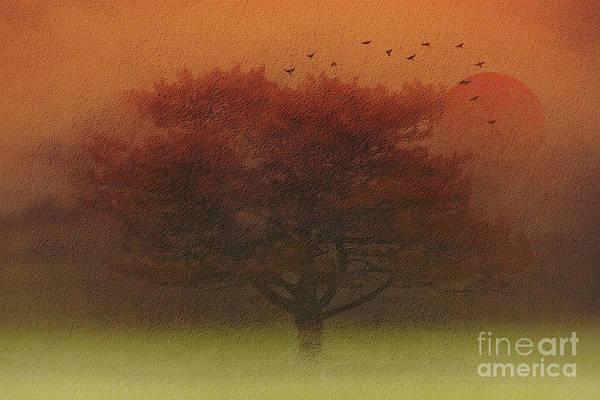 Wall Art - Photograph - In The Early Morning Glow by Tom York Images