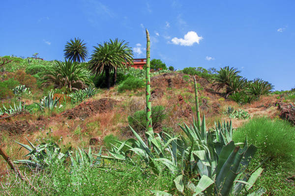 Photograph - In The Fields Of Masca by Sun Travels