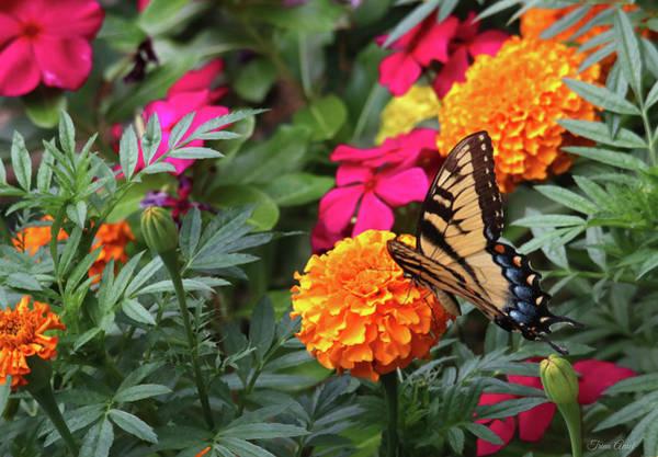 Photograph - In The Garden by Trina Ansel
