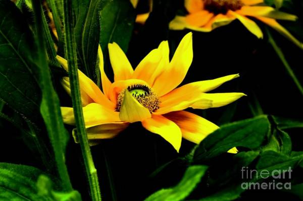Photograph - In The Middle by Diana Mary Sharpton