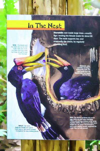 Hornbill Painting - In The Nest by Jeelan Clark