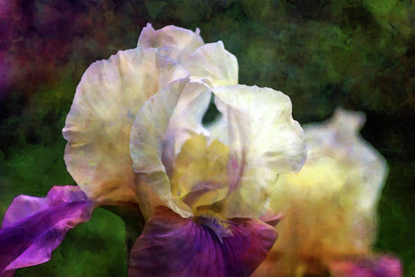 Photograph - In The Plasma Of Sunset 0295 Idp_2 by Steven Ward