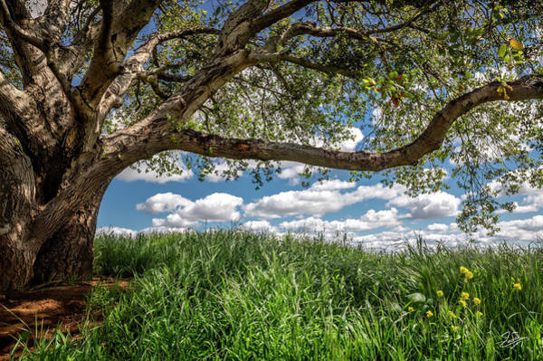 Photograph - In The Shade Of The Old Oak Tree by Endre Balogh