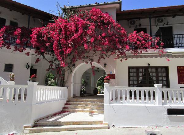 Photograph - In The Shadow Of Bougainvillea by Rosita Larsson