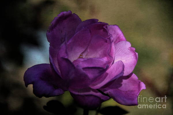 Photograph - In The Shadows by Diana Mary Sharpton