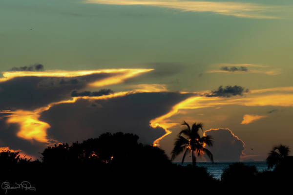 Photograph - In The Tropics by Susan Molnar