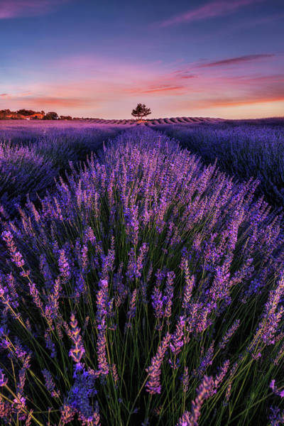 Photograph - In To The Dream by Jorge Maia