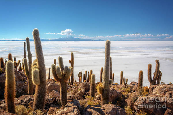 Wall Art - Photograph - Incahuasi Island In Salar De Uyuni, Bolivia by Delphimages Photo Creations