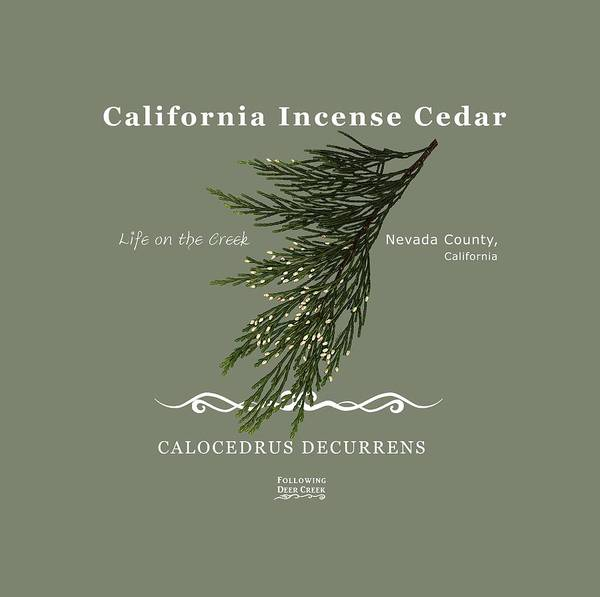 Digital Art - Incense Cedar - White Text by Lisa Redfern