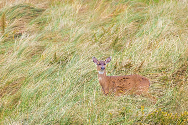 Oregon Wildlife Wall Art - Photograph - Incognito by Brian Knott Photography