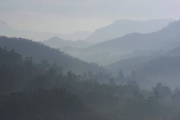 Bleached Photograph - India, Kerala, Western Ghats Mts., Tea by Sydney James